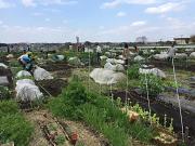 マイファーム府中白糸台農園のアルバイト・バイト・パート求人情報詳細