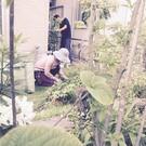 【ツリークライミングをやる植木屋】 ~25歳まで。朝霞市、…