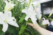 【高時給1200円~】お花の配送スタッフ大量募集中!!未経験歓迎★